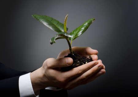 rubber plant:  human hands  close  with  scion  rubber plant, business concept