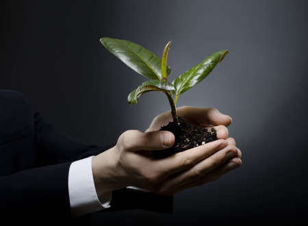 upgrowth: human hands  close  with  scion  rubber plant, business concept Stock Photo