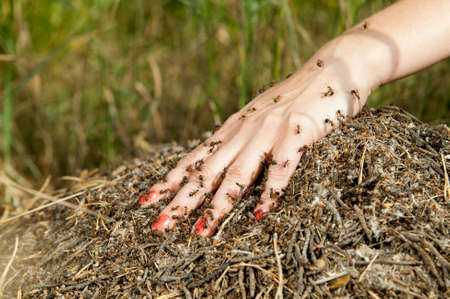 A plenty of ants on a female hand, fingers separately, on a green background photo