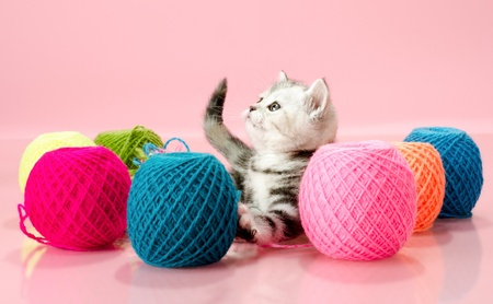clew: the grey  beautiful little  kitten with  many multi-coloured clew,  on pink  background