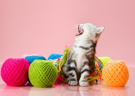 the grey  beautiful little  kitten with  many multi-coloured clew,  on pink  background , stare look on camera Stock Photo - 13594208