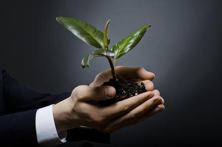 human hands  close  with  scion  rubber plant, business concept photo
