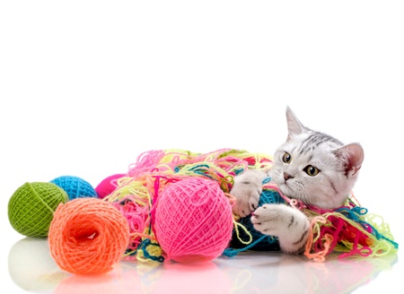 the grey  beautiful little  kitten play with  many multi-coloured clew,  on white  background , isolated Stock Photo - 14694184