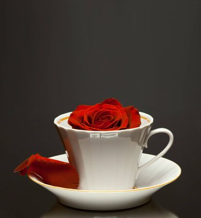 red beautiful rose in white teacup , close up, on dark grey background photo