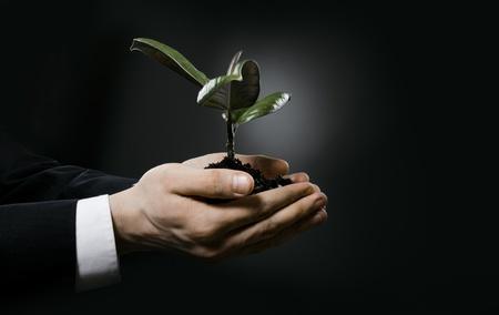 les mains de l'homme étroits avec usine de caoutchouc scion, concept d'entreprise Banque d'images - 15223391
