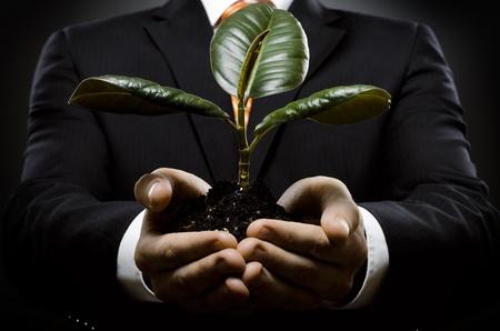 rubber plant: human hands  close  with  scion  rubber plant, business concept Stock Photo
