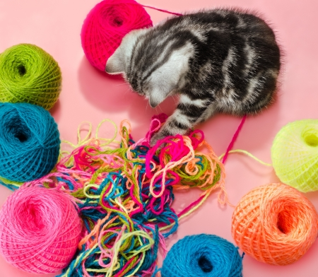 the grey  beautiful little  kitten with  many multi-coloured clew,  on pink  background  photo