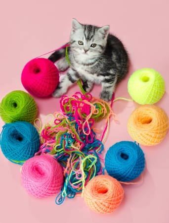 the grey  beautiful little  kitten with  many multi-coloured clew,  on pink  background  Stock Photo - 17755367