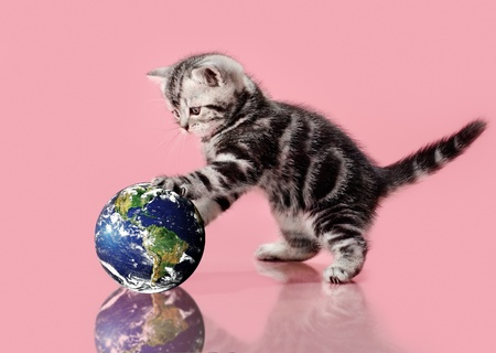 The small, beautiful, fluffy, grey kitten, touch paws globe, on a white background photo