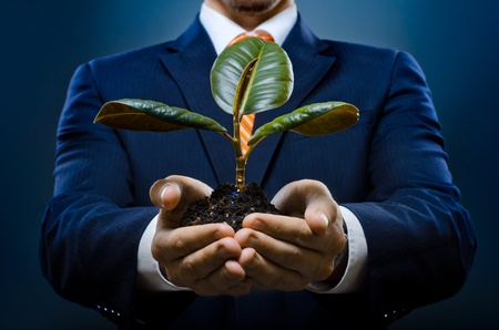 rubber plant: human hands  close  with  scion  rubber plant, business concept Stock Photo