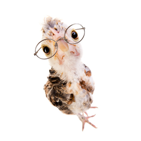 sagacious: one adolescent comose chick stand on grey background, close up, look on camera in eyeglasses Stock Photo
