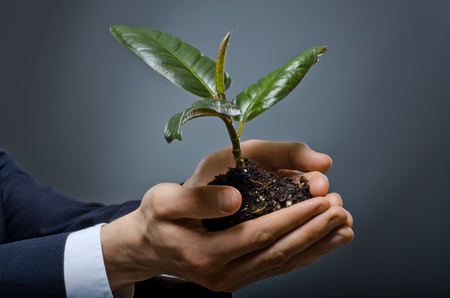 solicitous: human hands  close  with  scion  rubber plant, business concept Stock Photo