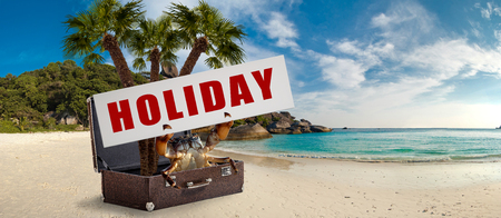 crab hold banner with text holiday on seashore sitting in vintage suitcase , holiday concept