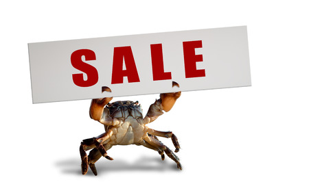 crab bricklayer stand and lifted claws up with white board , on white background; isolated, sale (discount) concept
