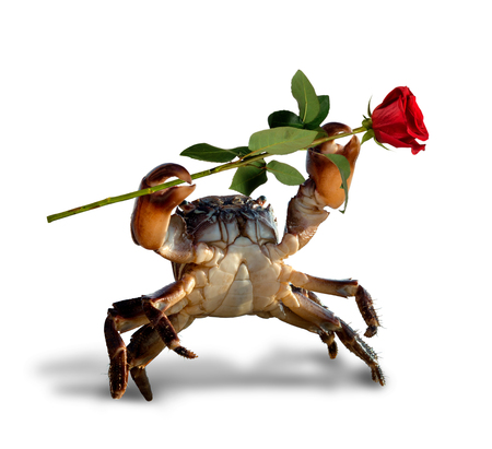 crab bricklayer lifted claws up with single rose, on white background; isolated, St. Valentines Day concept Stock Photo