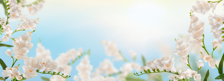 beautiful  horizontal flower background , spring concept Stock Photo