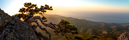 Beauty nature landscape Crimea with tree - pine, horizontal photo Reklamní fotografie - 118709286