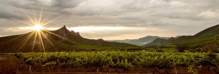landscape vineyard field and mountain on peninsula Crimea, horizontal photo , panoramic view
