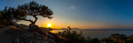 Beauty nature landscape Crimea with tree - pine, horizontal photo, wide panoramic view Stock Photo