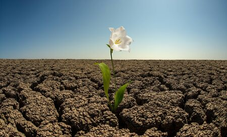 flower to grow out on droughty desert, horizontal photo