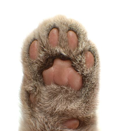 paw cat �loseup , voting concept, vertical photo on white background, isolated Stockfoto