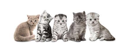 group of gray kitten on white backgroud, isolated