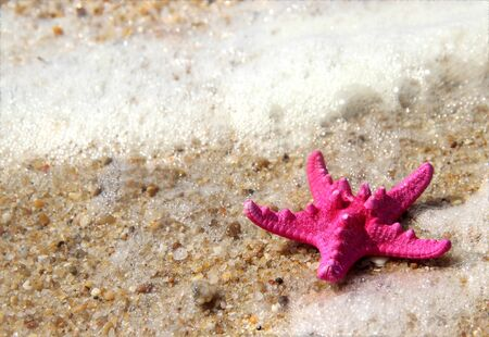 Sea time composition: pink starfish on the beach photo