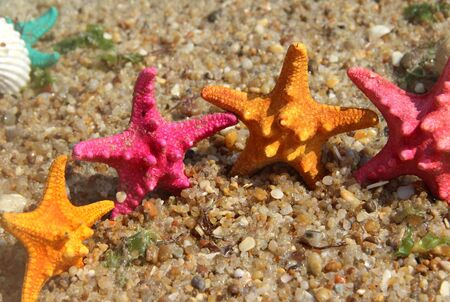 Sea time composition: funny starfishes on the beach   photo
