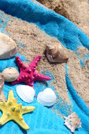 Sea composition of starfishes, shells and blue towel photo