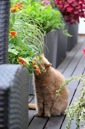 Well designed modern terrace with a lot of flowers and funny cat     photo