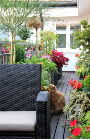 Well designed modern terrace with a lot of flowers and funny cat Stock Photo