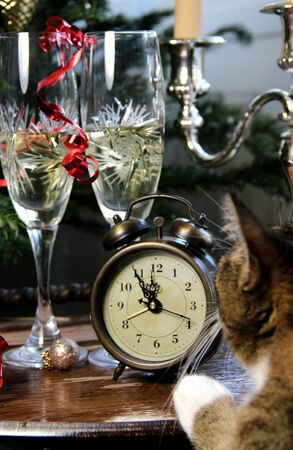 Funny cat waiting for the New Year photo