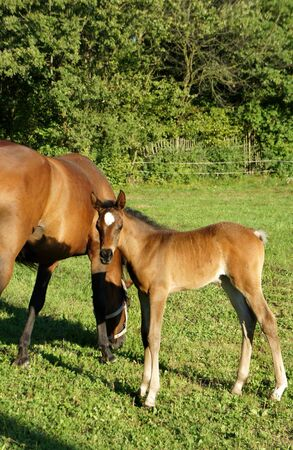Horse and small funny foal photo