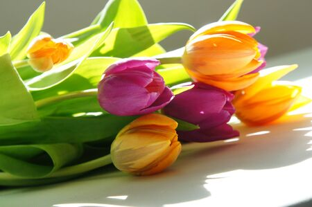 Beautiful mix of vivid multicolored tulips       photo