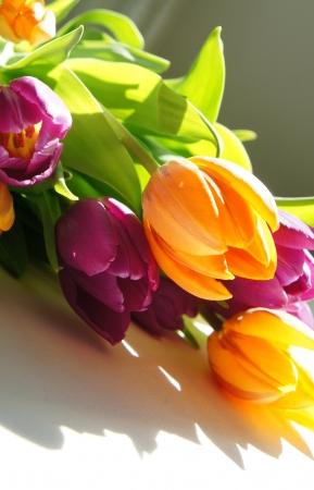 Beautiful mix of vivid multicolored tulips                        Stock Photo