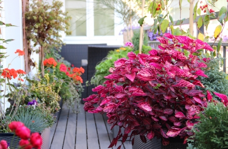 Well designed modern terrace with a lot of flowers  Stock Photo