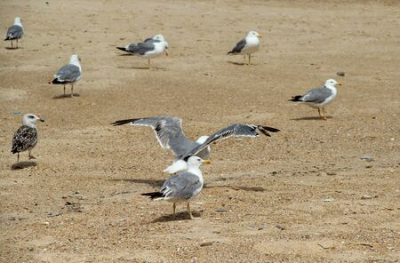 Seagulls on the empty beach  photo