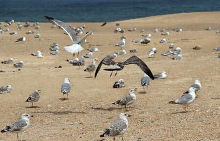Lot of seagulls on the empty beach  Stock Photo - 17278270