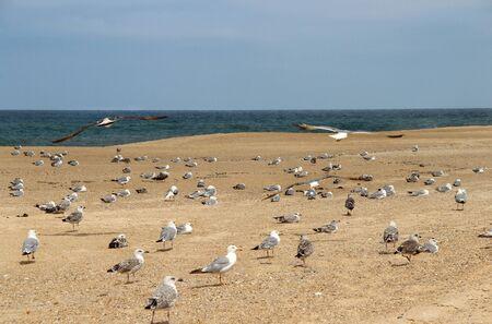 Lot of seagulls on the empty beach Stock Photo - 17278284