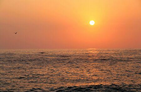 Beautiful sunset on the beach and seagulls  photo