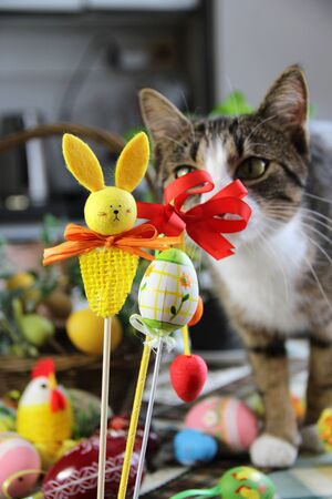 Mix of beautiful handmade Easter colored eggs, rabbit and funny cat photo