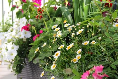花の多くのモダンで美しい豪華なテラス