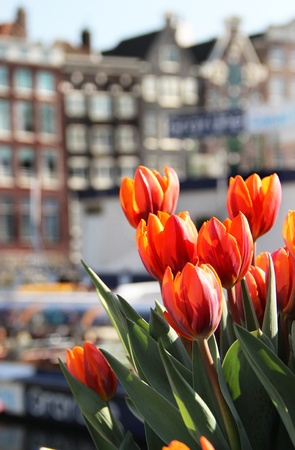 Beautiful view of Amsterdam building, channels and boats with a lot of tulips photo