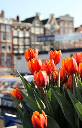 Beautiful view of Amsterdam and lot of tulips photo