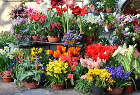Sunny terrace with a lot of flowers in the vivid pots Stock Photo