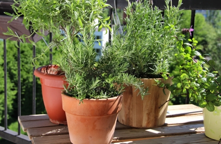 Rosemary, mint, lavender and other herbs in the pot Standard-Bild