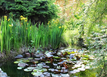 House beautiful garden with small pond Standard-Bild