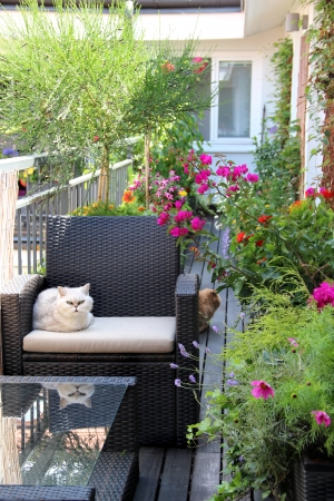 garden furniture: Modern real estate – house with cats and lot of flowers Stock Photo