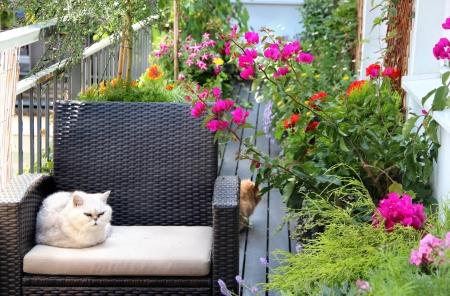 現代の不動産家猫とたくさんの花 写真素材