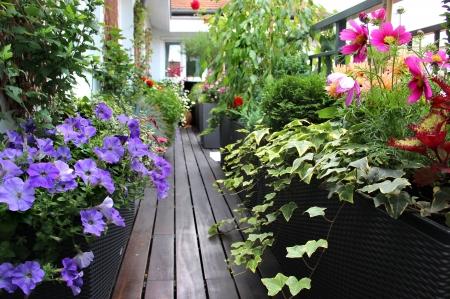 たくさんの花と現代の不動産家テラス